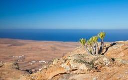 Inlands- Fuerteventura, Tindaya Fotografering för Bildbyråer