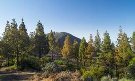 Inlands- Gran Canaria, Montanon neger Royaltyfria Foton