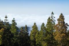 Inlands- Gran Canaria, sikt över trädblasten in mot molnräkningen Arkivbilder