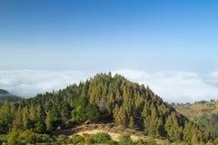 Inlands- Gran Canaria, sikt över trädblasten in mot molnräkningen Fotografering för Bildbyråer