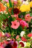 Inlandse wilde bloemen Royalty-vrije Stock Foto's