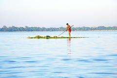 INLE湖,缅甸- 2015年11月15日:本地工人收集 免版税库存照片