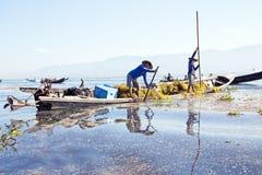 INLE湖,缅甸- 2015年11月23日:本地工人收集 库存图片