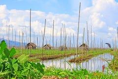 Inle Jeziorny Spławowy gospodarstwo rolne, Myanmar zdjęcie stock