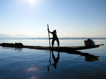 Inle Lake fisherman. Fisherman at work in the morning collecting plant under the water from Inle Lake, Myanmar Royalty Free Stock Photography