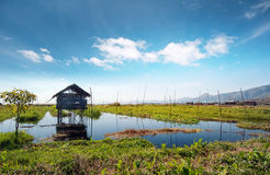 Inle Lake Myanmar, Shan state. Floating gardens Stock Photography