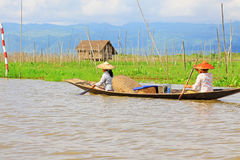 Inle Lake Resident Paddling On The Lake, Myanmar. Inle Lake Resident Paddling On The Lake In Myanmar Royalty Free Stock Image