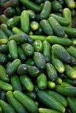 Inleggende komkommers Stock Foto