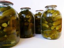 Inleggende komkommers Royalty-vrije Stock Foto