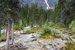 Inlet creek of Lake Moraine Royalty Free Stock Images