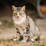 Inländische junge Katze Gray White Mixed Breed Short-Haireds, sitzend Lizenzfreie Stockfotografie