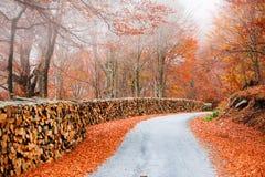 Inloggning av skogen Royaltyfri Foto
