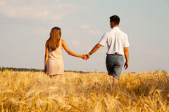 Inlove couple walking through  wheat field Stock Images