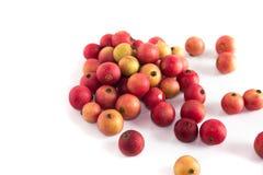 Inna Jamajskiej wiśni owoc jest Malayan Czereśniowy Calabura Dżem na białym tle obrazy stock