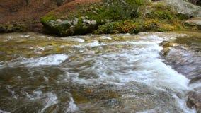 Innaffi entrare nel fiume Eresma al parco naturale di Boca del Asno un giorno piovoso a Segovia, Spagna archivi video