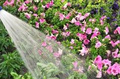 Innaffi i fiori Fotografie Stock Libere da Diritti