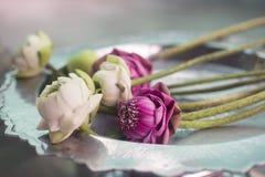 Innaffi il loto su un piatto in un tempio in Tailandia, Fotografie Stock