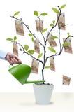 Innaffi l'albero dei soldi Fotografie Stock Libere da Diritti