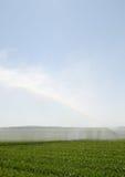 Innaffi l'irrigazione sul campo Flevoland Immagini Stock