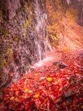 Innaffi la sgocciolatura su una parete della roccia nella foresta fotografia stock libera da diritti