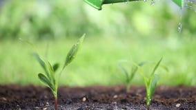 Innaffi le piante nel giardino