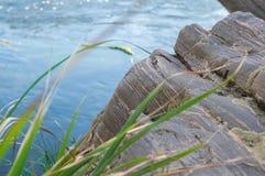 Innaffi le pietre di tornitura su un fondo di un fiume blu e su una canna verde nella priorità alta Immagine Stock Libera da Diritti