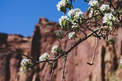 Innaffi le vostre radici in modo dalla vostra anima può sbocciare fotografia stock