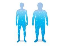 Innaffi nel corpo di differenza fra l'uomo ben fatto ed il grasso illustrazione vettoriale
