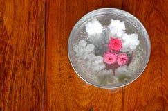 Innaffiando con il fiore, per il elderl di rispetto Fotografie Stock Libere da Diritti