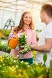 Innaffiando e prendendo cura dei fiori Fotografia Stock
