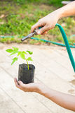 Innaffiatura degli alberi che pompano attraverso il tubo di gomma Fotografia Stock