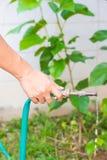 Innaffiatura degli alberi che pompano attraverso il tubo di gomma Fotografia Stock Libera da Diritti