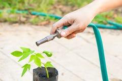 Innaffiatura degli alberi che pompano attraverso il tubo di gomma Immagine Stock