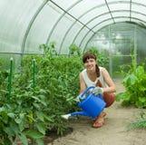 Innaffiatura del giardiniere Immagini Stock Libere da Diritti