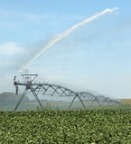 Innaffiatura del raccolto della soia Fotografia Stock