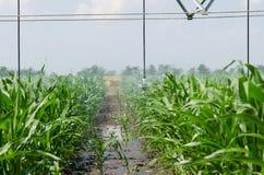 Innaffiatura del raccolto di cereale Fotografia Stock