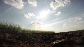 Innaffiatura del terreno arabile asciutto video d archivio