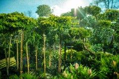 Innaffiatura delle piante dell'azienda agricola Fotografia Stock