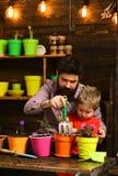 Innaffiatura di cura del fiore Fertilizzanti del suolo Padre e figlio Giorno di padri Giorno della famiglia serra Uomo e ragazzin immagini stock