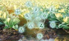 Innaffiatura naturale dell'agricoltura Tecnologie avanzate ed innovazioni nell'agroindustria Qualità di studio di suolo e del rac immagine stock libera da diritti