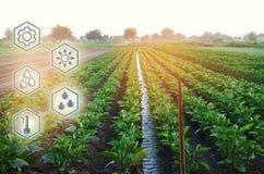 Innaffiatura naturale dell'agricoltura Tecnologie avanzate ed innovazioni nell'agroindustria Qualità di studio di suolo e del rac immagini stock libere da diritti