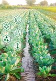 Innaffiatura naturale dell'agricoltura Tecnologie avanzate ed innovazioni nell'agroindustria Qualità di studio di suolo e del rac fotografie stock libere da diritti