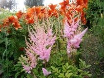 inne kwiaty obrazy royalty free
