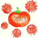 Innehållet av vitaminer i tomat Fotografering för Bildbyråer