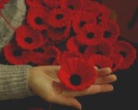 Innehavet för handen för kvinna` s stack vallmo för välgörenhet Royaltyfri Fotografi