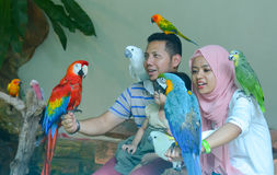 Innenansicht von Kuala Lumpur Bird Park, Malaysia Stockbild