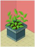 Innengarten mit Topfpflanze Stockfotografie