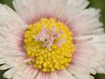 Innenraum der Blume Stockfotos