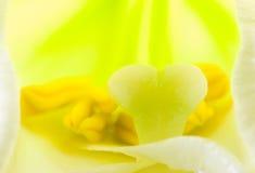 Innenraum der Lilienblume Stockbilder
