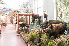 Innenraum des zoologischen Museums von Klausenburg Stockbild